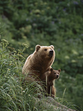 Grizzly Bear (Ursus Arctos Horribilis) Mother and Cub, Katmai Nat'l Park, Alaska Photographic Print by Suzi Eszterhas/Minden Pictures