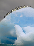 Adelie Penguin (Pygoscelis Adeliae) on Iceberg, Laurie Island, South Orkney Islands, Antarctica Photographic Print by Tui De Roy/Minden Pictures