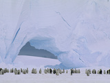 Emperor Penguin (Aptenodytes Forsteri) Large Rookery on Sea Ice, Atka Bay, Weddell Sea, Antarctica Photographic Print by Tui De Roy/Minden Pictures