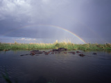 Rainbow over Hippopotamus (Hippopotamus Amphibius) Soaking in Linyanti River Photographic Print by Gerry Ellis