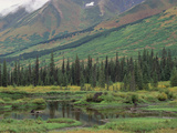 Taiga Vegetation and Beaver Pond, Chugach National Forest, Alaska Photographic Print by Gerry Ellis