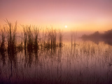 Reeds Reflected in Sweet Bay Pond at Sunrise, Everglades National Park, Florida Photographic Print by Tim Fitzharris/Minden Pictures