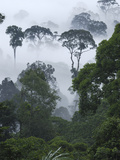 Dawn with Fog at Lowland Rainforest, Danum Valley Conservation Area, Borneo, Malaysia Photographic Print by Thomas Marent/Minden Pictures