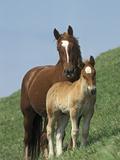 Horse (Equus Caballus) Mare with Foal on Grassy Slope, Italy Photographic Print by Konrad Wothe