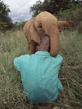 African Elephant (Loxodonta Africana) Orphan Playing, Tsavo East National Park, Kenya Photographic Print by Gerry Ellis