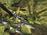 Downed Logs in Sorensen Creek, Temperate Rainforest, Columbia Gorge, Oregon Photographic Print by Gerry Ellis