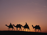Egyptians Riding Camels across Desert Near the Pyramids of Giza at Sunset, Cairo, Egypt Photographic Print by Gerry Ellis
