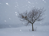 Lonely Tree in Snow, Bavaria, Germany Fotografiskt tryck av Konrad Wothe
