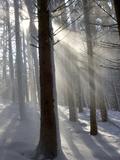 Snowy Forest in Morning Sun, Bavaria, Germany Fotografisk tryk af Konrad Wothe