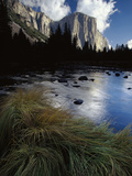 River Grasses at Merced River, Reflection of Late Light on El Capitan, Yosemite, California Photographic Print by Gerry Ellis