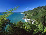 West Coast, Paparoa National Park, South Island, New Zealand Fotografiskt tryck av Konrad Wothe