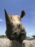 Black Rhinoceros (Diceros Bicornis), Lewa Wildlife Conservation Area, Kenya Photographic Print by Gerry Ellis