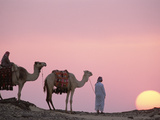 Bedouins with Dromedary Camels (Camelus Dromedarius) at Sunset, Oasis Dakhia, Egypt Photographic Print by Gerry Ellis