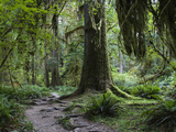 Trail in Forest, Hoh Rainforest, Olympic National Park, Washington Photographic Print by Konrad Wothe