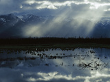 Sunlight Filtering Through Clouds over Boreal Pond, Alaska Photographic Print by Michael S. Quinton