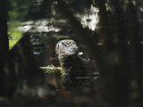 A Water Monitor Lizard Standing in Water Photographic Print by Tim Laman