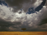 Storm Front and Acacia Trees (Acacia Drepanolobium), Masai Mara National Reserve, Kenya Photographic Print by Gerry Ellis