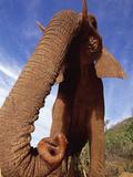 African Elephant (Loxodonta Africana) Tsavo East National Park, Kenya Photographic Print by Gerry Ellis