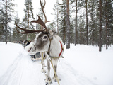 A Reindeer Sled Ride Photographic Print by Alison Wright
