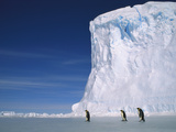 Emperor Penguins (Aptenodytes Forsteri), Antarctica Photographic Print by Pete Oxford