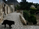 A Dog on a Cobbled Walkway in Baux De Provence Photographie par AJ Wilhelm