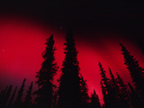 Red Aurora Borealis over Boreal Forest, Alaska Photographic Print by Michael S. Quinton