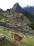 The Ruins at Machu Picchu and a Llama Photographie par Kent Kobersteen