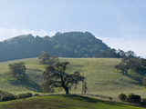 Landscape of Grassy Rolling Hills and Trees Photographic Print by Brian Gordon Green