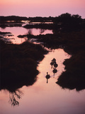 A Marsh at Dawn with Canada Geese, Branta Canadensis Photographic Print by Bates Littlehales