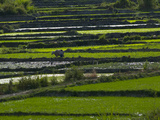 Scenic View of Rice Paddies Photographic Print by Karen Kasmauski