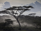 Clouds, African Trees and Dust on Tanzania's Serengeti Plain Fotografisk tryk af Kent Kobersteen