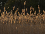 A Field of Sea Oats Photographic Print by Karen Kasmauski