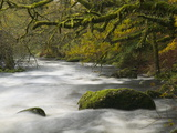 East Dart River, Dartmoor National Park, Devon, Great Britain Photographic Print by Nigel Hicks