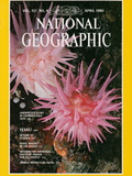 Cover of the April, 1980 Issue of National Geographic Magazine Photographic Print by David Doubilet