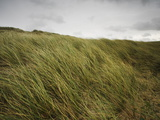 Coastal Maram Grass Being Flattened by a High Stormy Wind Photographic Print by Nigel Hicks