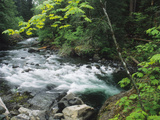 The Sol Duc River Rushing Through Lush Woodlands Photographic Print by Bates Littlehales