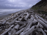 Driftwood Along the Pacific Shoreline in Olympic National Park Photographic Print by Paul Damien