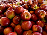 Fresh Picked and Washed Apples for Sale Photographic Print by Brian Gordon Green