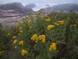 Wildflowers Blooming on a Rocky Atlantic Coast in Maine Photographic Print by Karen Kasmauski