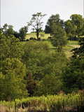Rolling, Wooded Hills of the Maple Grove Road Rural Historic District Photographic Print by Steve Raymer