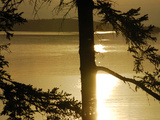 Silhouetted Pine Trees and Dramatic Golden Sunset over Penobscot Bay Photographic Print by Anne Keiser