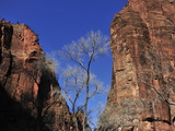 Canyon Walls Along the Virgin River Photographic Print by Raul Touzon