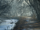 Misty View Looking South on the C&O Canal Photographic Print by Brian Gordon Green
