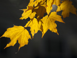 Autumn Leaves Photographic Print by Karen Kasmauski