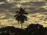 A Silhouetted Palm Tree and Dramatic Clouds at Sunset Photographic Print by Karen Kasmauski