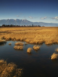 A Marshy Side Pool Off Lake Baikal Photographic Print by Aaron Huey