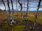 Tundra Near Site of Proposed Road for Pebble Mine Photographic Print by Michael Melford