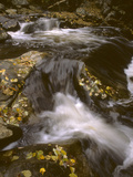 A Mountain Stream with Fallen Autumn Leaves Photographic Print by Bates Littlehales