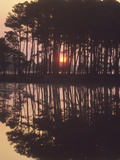 A Sunrise Seen Through Silhouetted Loblolly Pine Trees, Pinus Taeda Photographic Print by Bates Littlehales