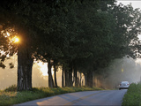 Sunlight Filters Through Trees on Maple Grove Road Photographic Print by Steve Raymer
